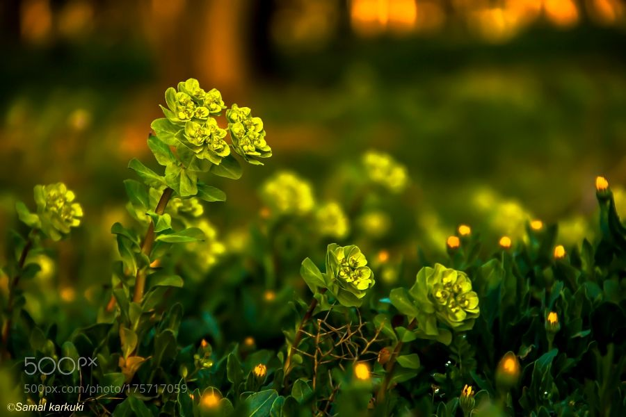 Plant in sunset III by samalkarkuki. @go4fotos