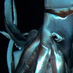 How Big Is Giant Squid Captured on Film - Infographic from @The_Gobstopper