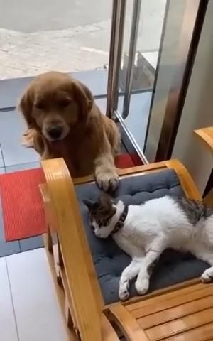 Dog in love with cat