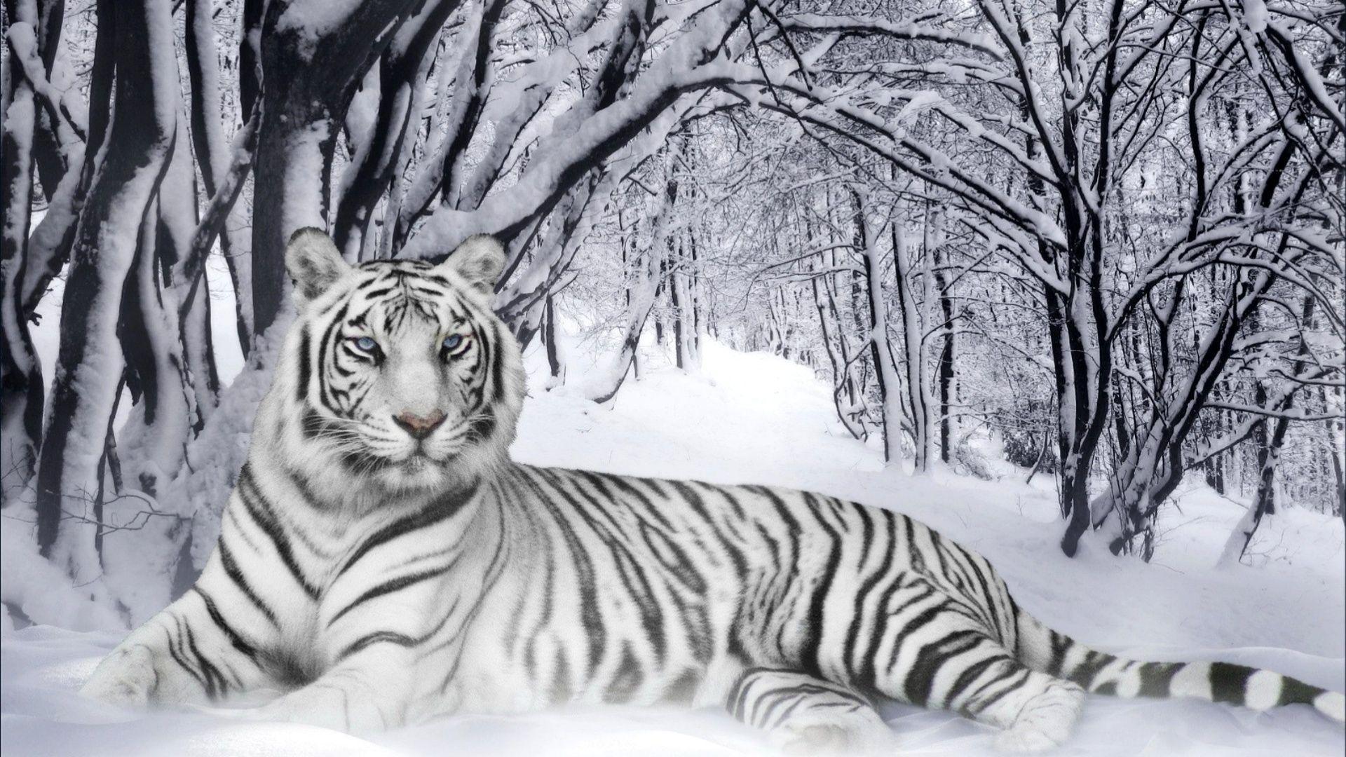 Tiger Hd Desktop Free Wallpaper Download Tiger Desktop Themes