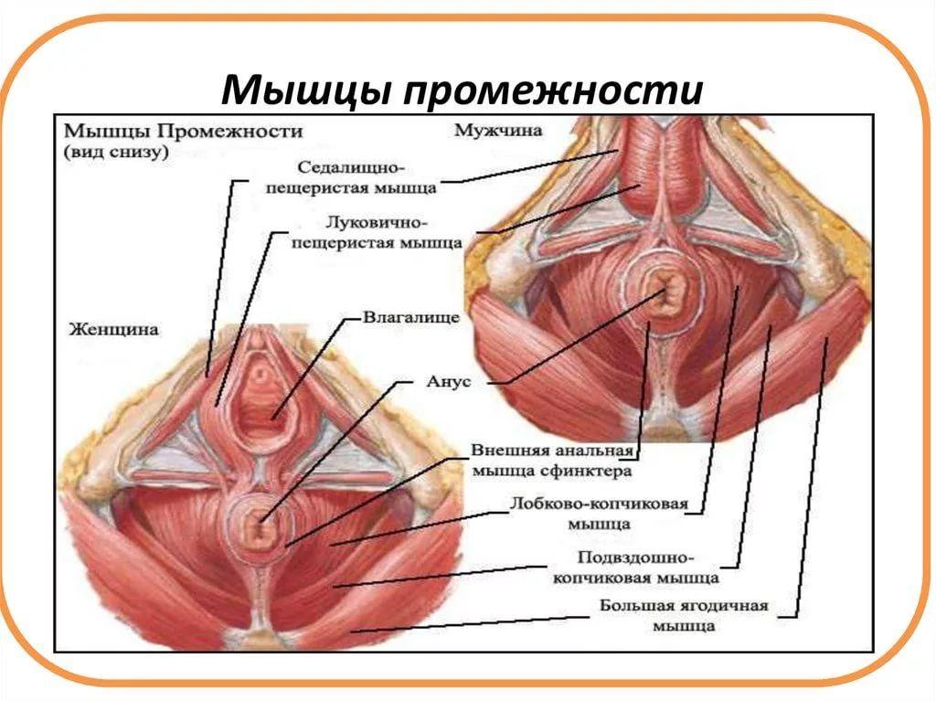специально русские волосатые вагины видео понравилось,но как-то