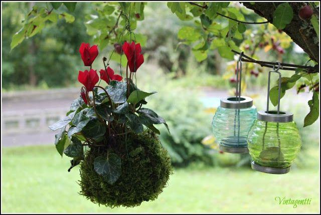 Kokedama on japanilainen nimitys sammalpallolle, johon on istutettu pieni kasvi. Kokedama ei kaipaa ruukkua, ja sen voi ripustaa vaikkapa puun oksalle roikkumaan amppelin tapaan. Tai asettaa sellaisenaan kauniin kiven päälle puutarhaan. Sisällä sammalpallon voi asettaa esimerkiksi kauniiseen lasipurkkiin.-Vintagentti