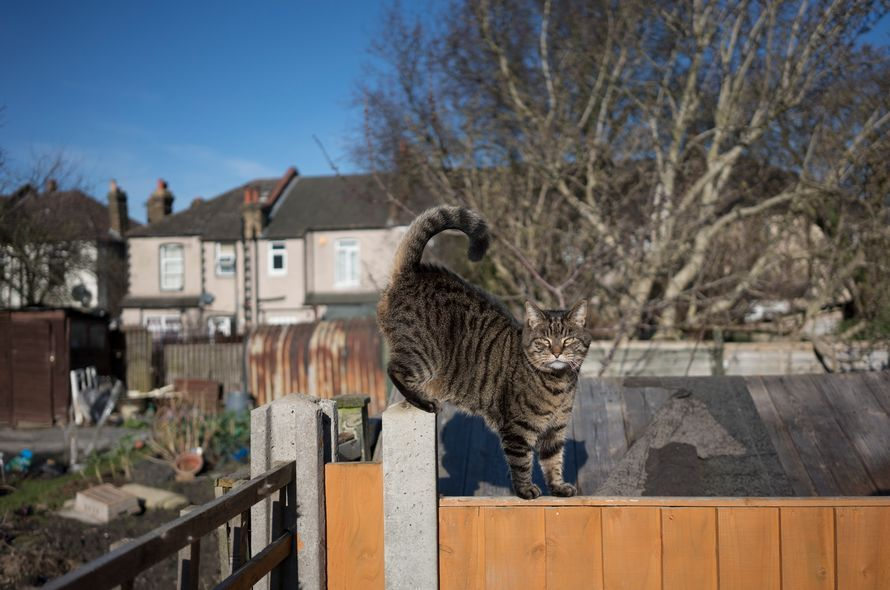 Creating a catfriendly garden or outside space