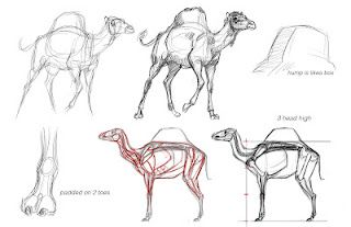 Animal Anatomy with Jonathan Kuo