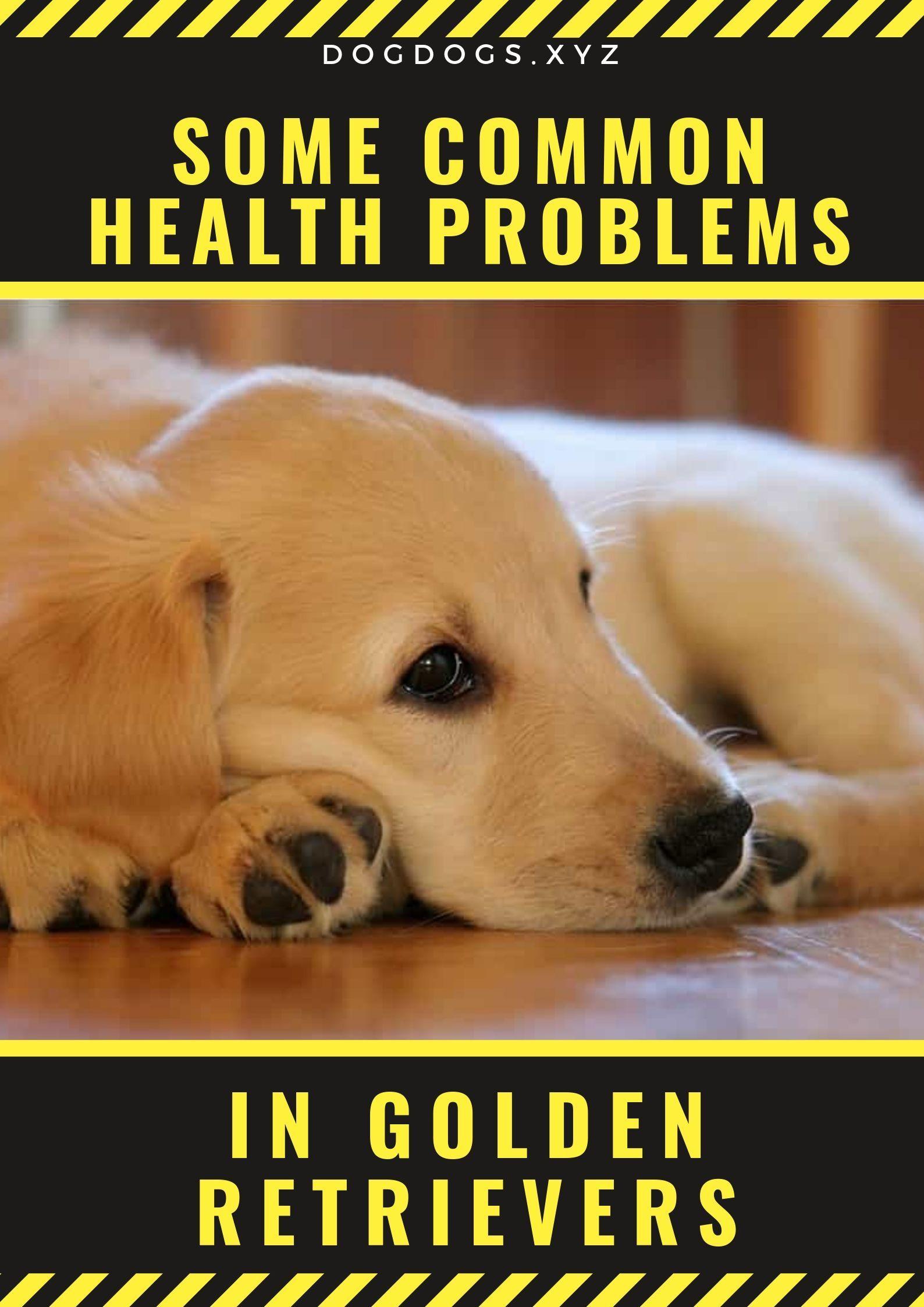 Some Common Health Problems In Golden Retrievers Golden