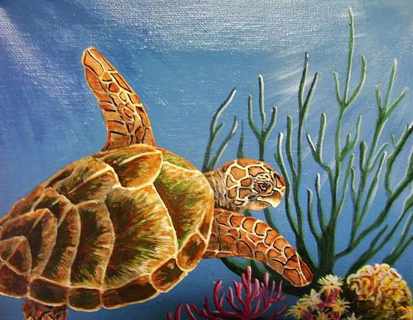 Sea turtle acrylic paintings sea turtle painting by for Turtle fish paint