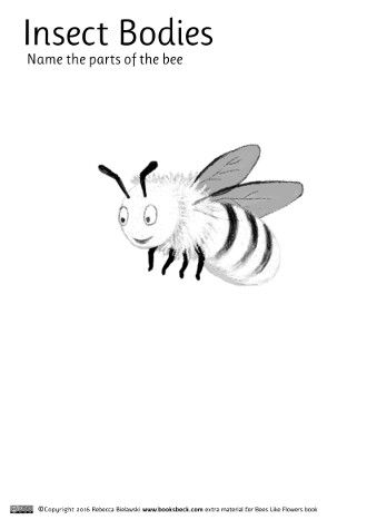 Printable colouring worksheet of a honey bee. Add the