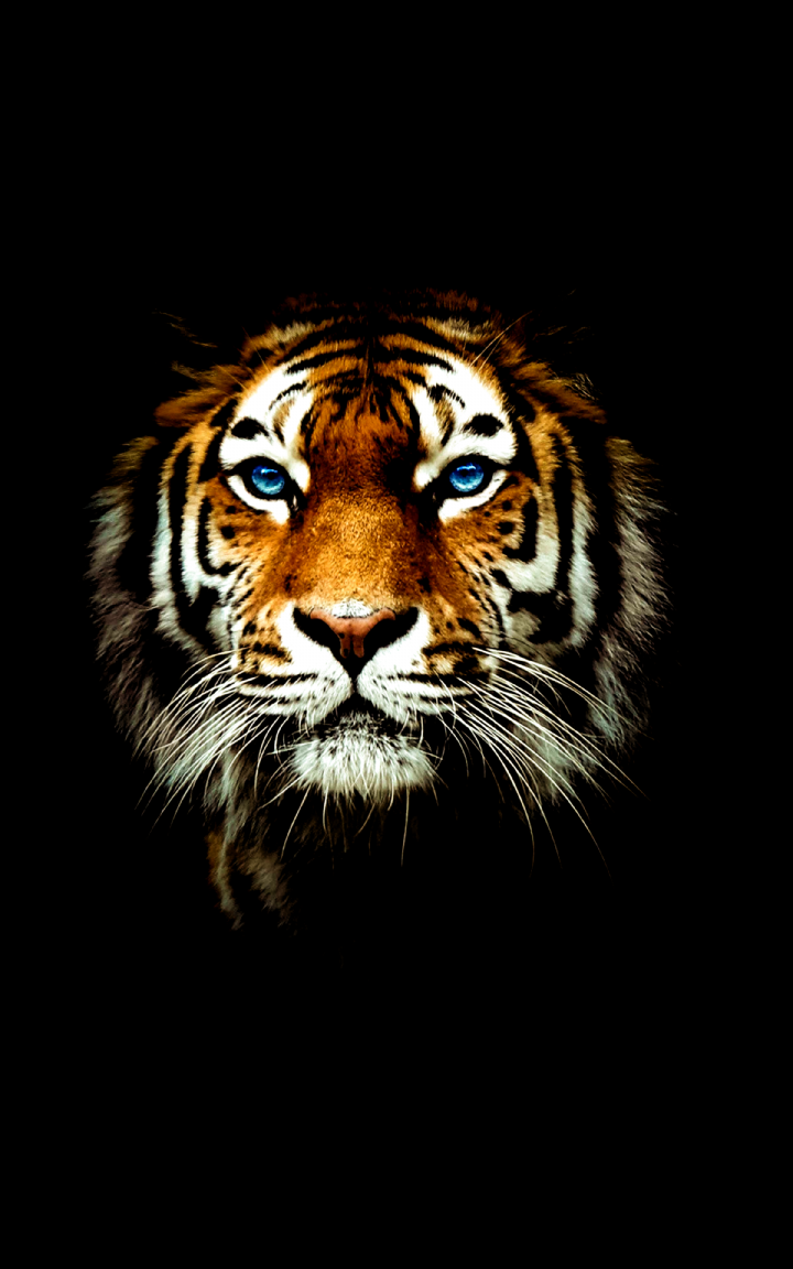 Tiger Wallpaper 4k Best Cool Tiger Wallpapers For Android Apk Download In 2020 Tiger Wallpaper Tiger Wallpaper Iphone Tiger Pictures