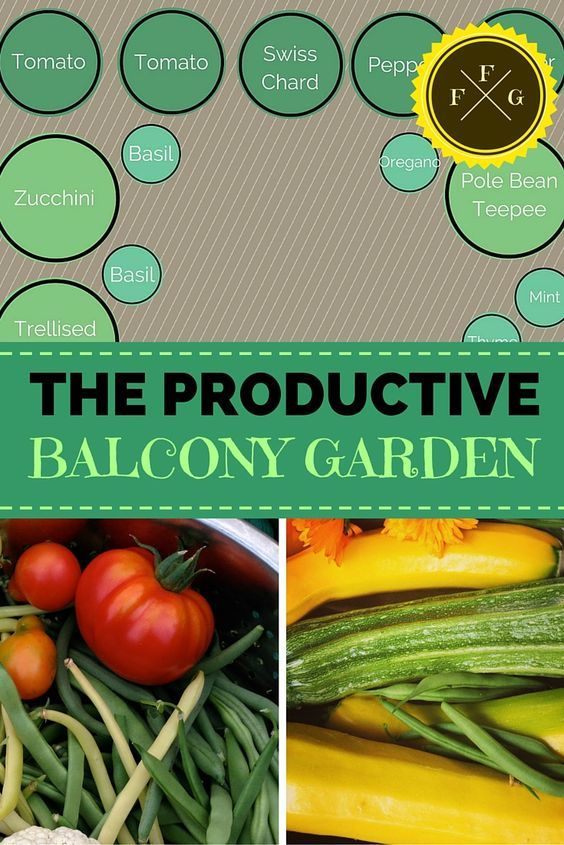 Productive Balcony Garden for Urban Gardening | Family Food Garden