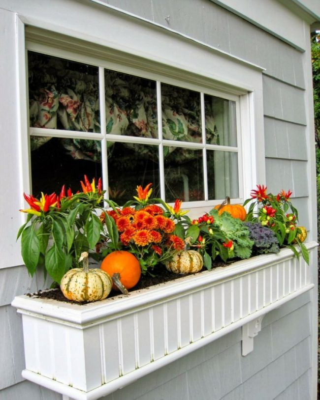 dekoideen für herbst blumenkasten fenster chili crysanthemen orange ...