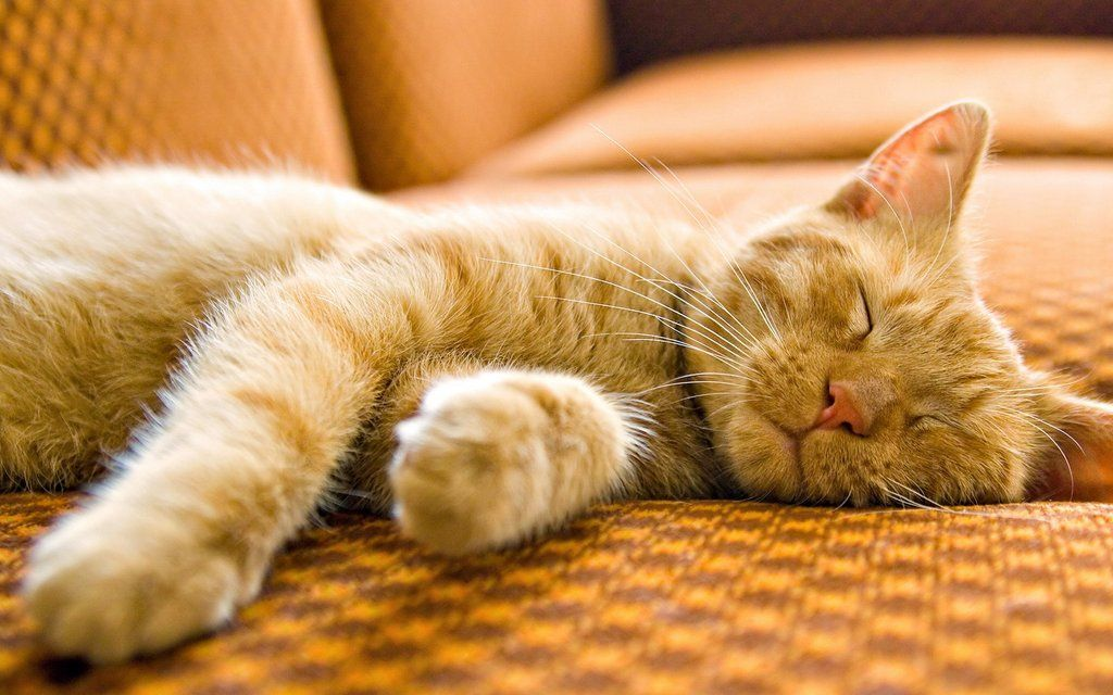 Cats sleep for 70% of their lives.