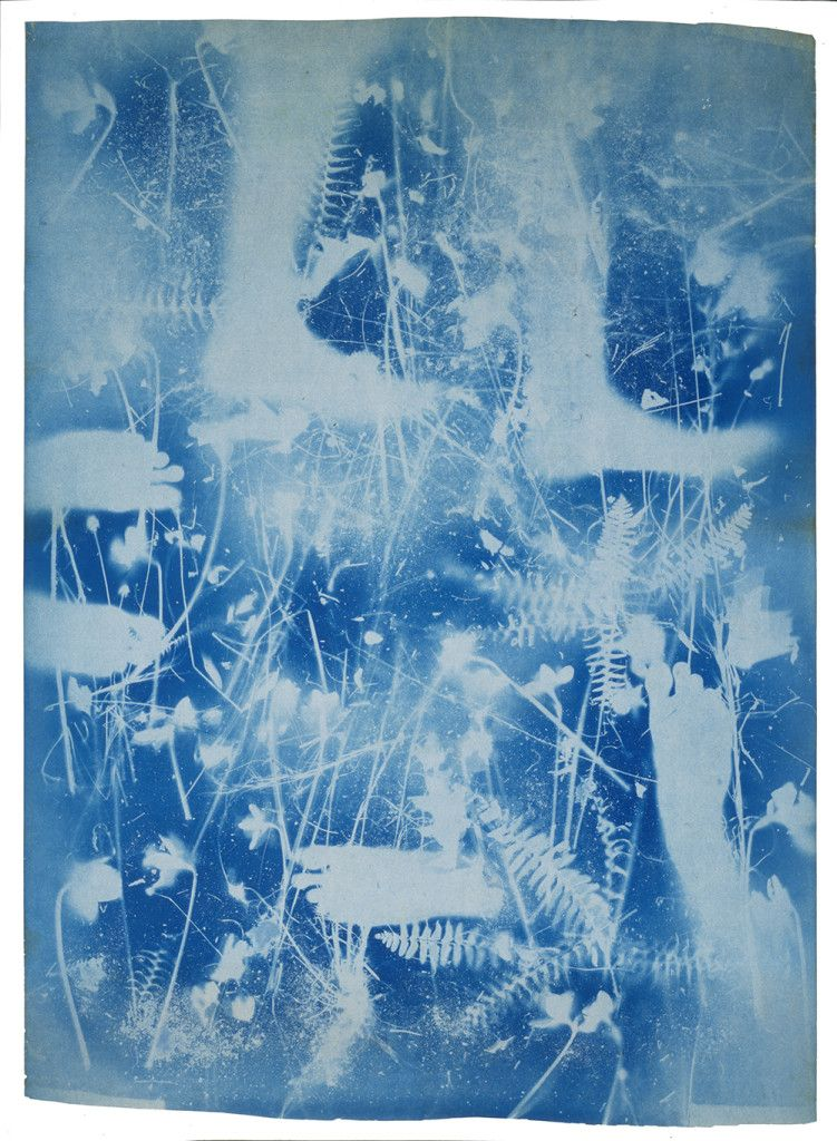 Untitled feet and foliage ca 1950 by susan weil and robert untitled feet and foliage ca by susan weil and robert rauschenberg monoprint exposed blueprint paper x 41 inches museum of modern art new york malvernweather Images