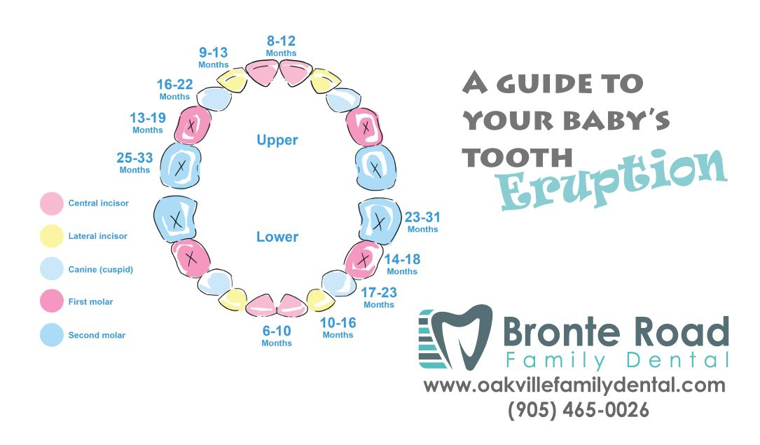 Tooth eruption guide - oakville dentist - bronte road family - baby teeth chart