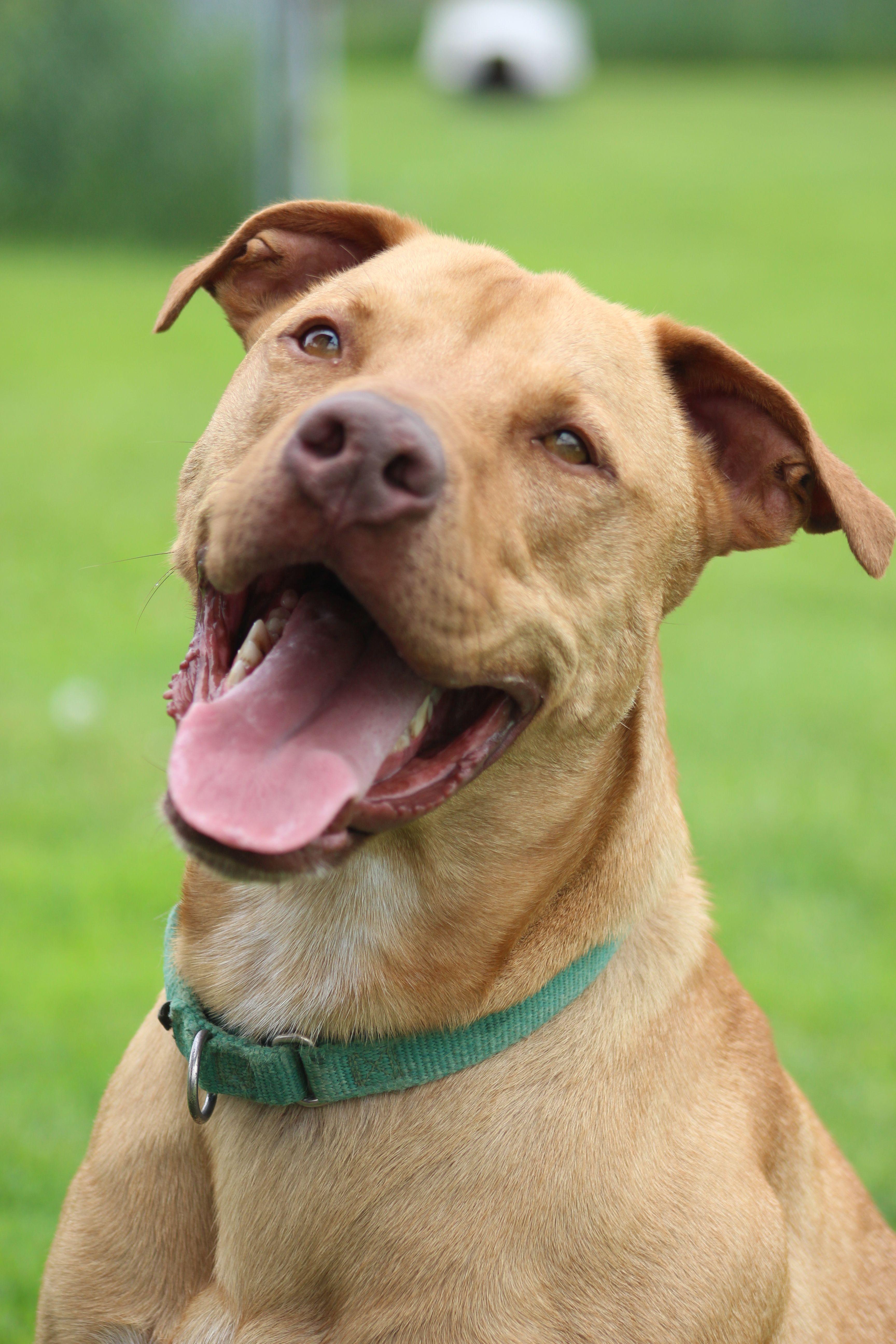 Adopt Wyatt (Adoption Fee Sponsored) on Dogs, Terrier