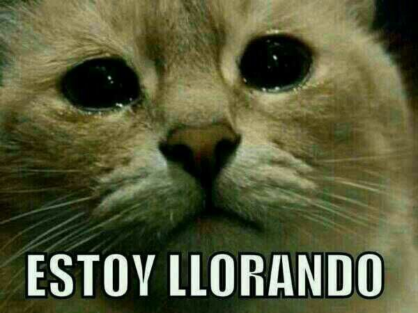 Funny Meme For Sad : Vegan animal pictures my slideshow grumpy cat meme funny cute sad