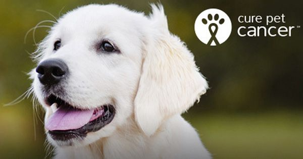 November is National Pet Cancer Awareness Month. For every #CurePetCancer post on Facebook, Twitter, or Instagram Nationwide Insurance​ will donate $5 to the Animal Cancer Foundation​, up to $20,000. http://www.curepetcancer.com