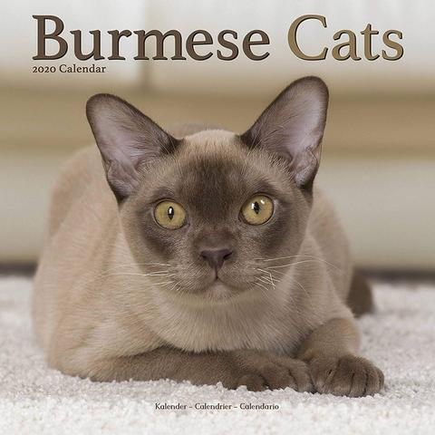Elegant Burmese Cats Grace The Pages Of The Burmese Cats Wall Calendar 2020 And Show Their Beautiful Colors And Markings In The F Burmese Cat Cat Calendar Cats