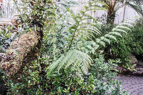 Botanic Gardens In Winter (Dublin) [The Streets Of Ireland]