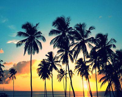 The Fashion Vibe Palm Tree Sunset California Palm Trees Palm Trees Wallpaper