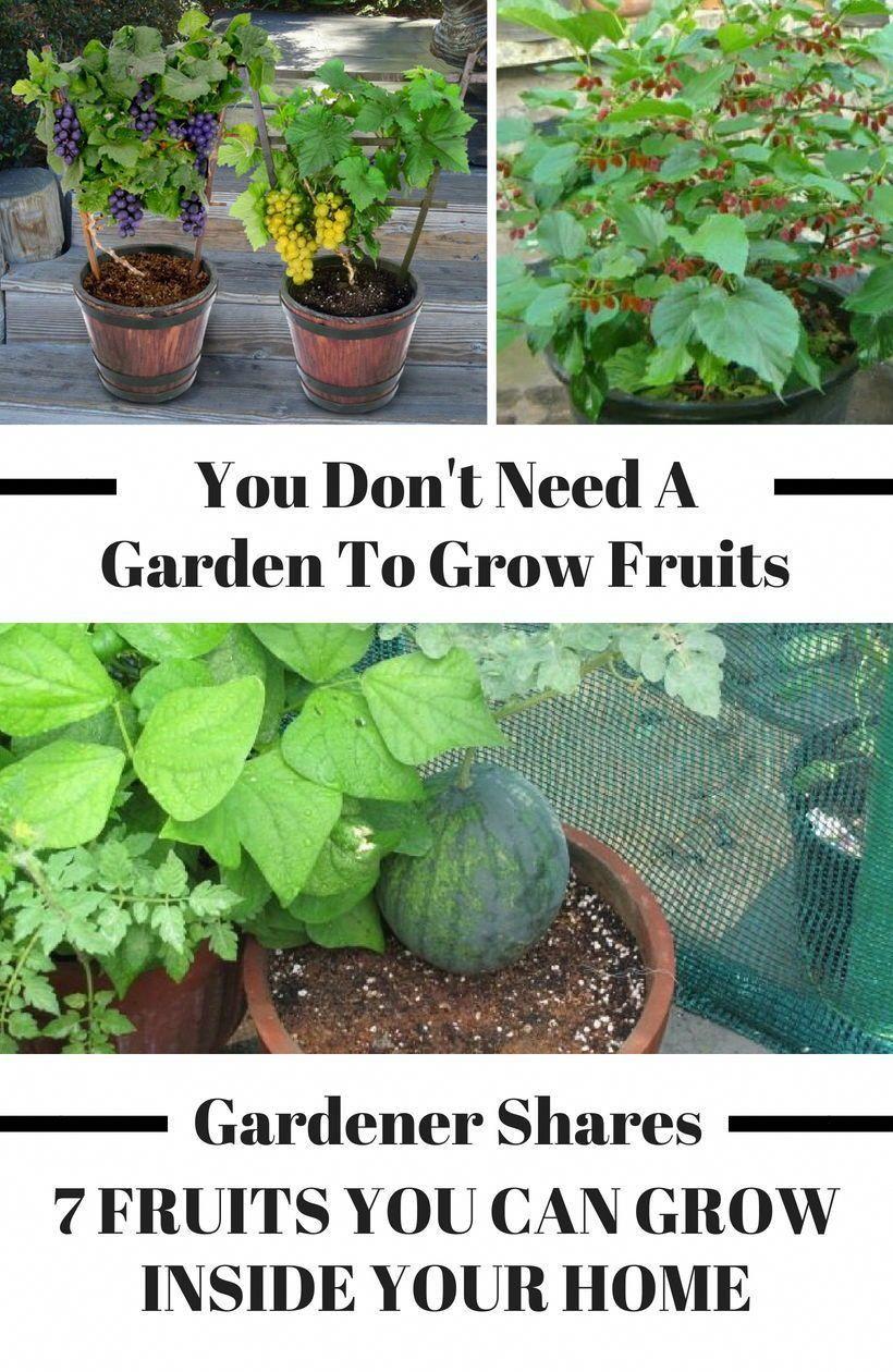 7be534597d365a3291e73785513e4ee1 - Where Can I Buy Gardening Supplies Near Me
