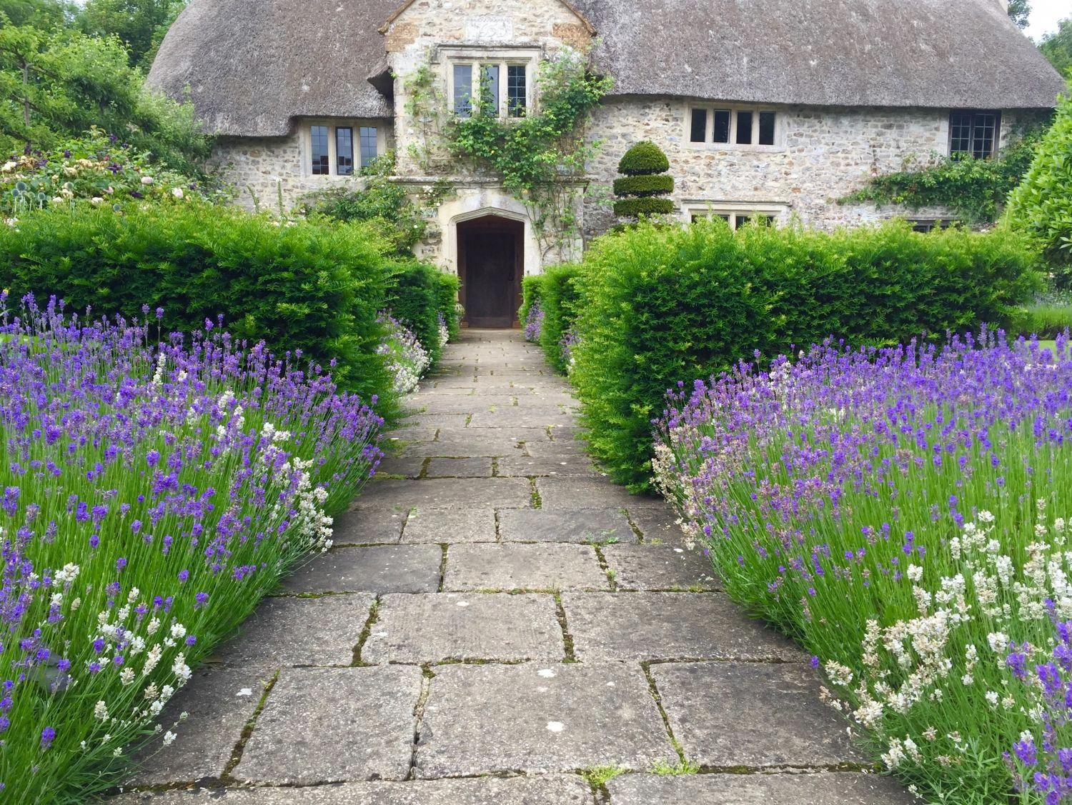 Blue And White Lavender Borders Along An Old Flagstone Path Leading To South Wood Farm Honiton Devon National Garden S Flagstone Path Garden Cottage Garden