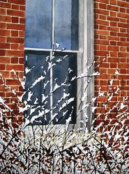 window with snowy branches watercolor painting by Lynn Pratt