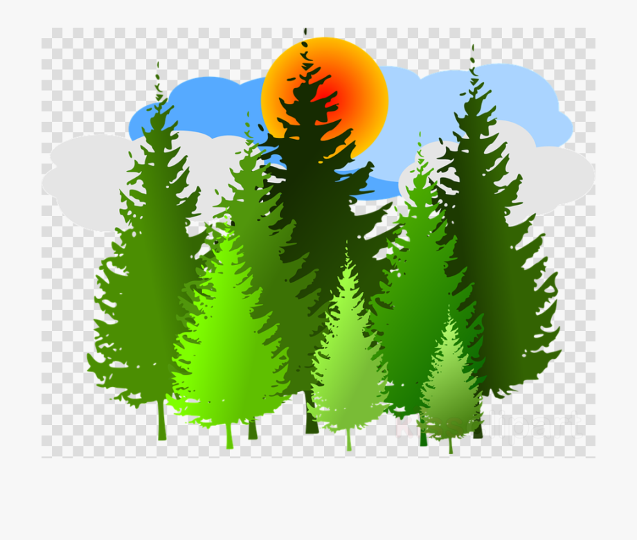 Download And Share In The Forest Clipart Transparent Background Cartoon Pine Tree Png Cartoon Seach More Similar Transparent Background Tree Icon Clip Art