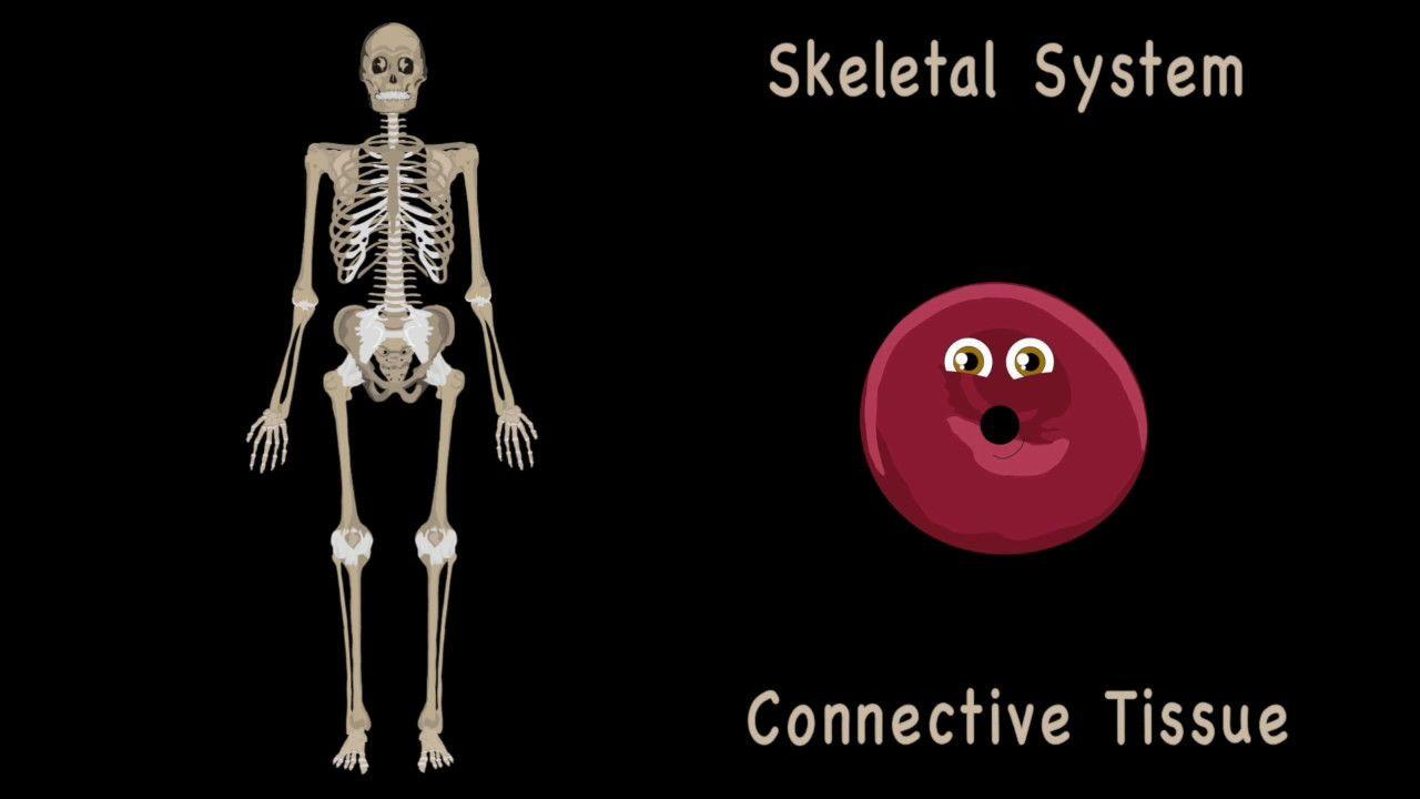 The Human Body For Kidslearn About The Human Body For Children46