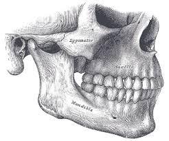 face skull anatomy - Google Search
