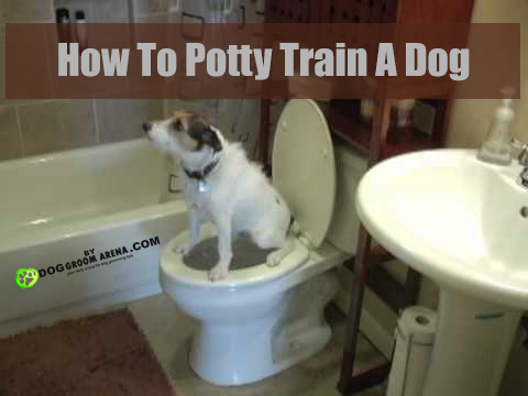 How To Potty Train A Dog At Night Potty Training Puppy Dog Training Clever Dog