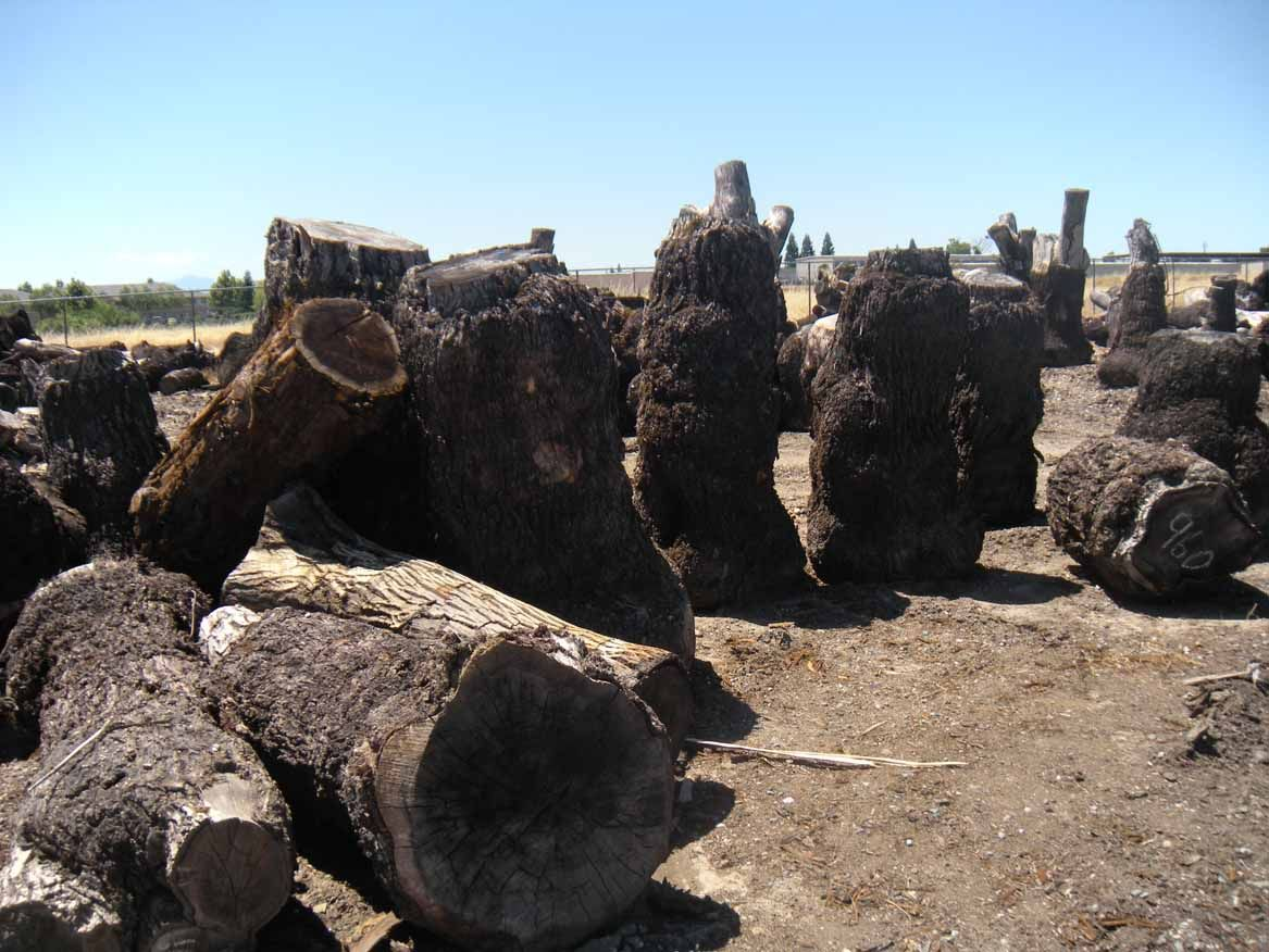A small selection of our walnut logs.