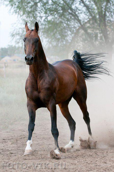 Equine horse pony equestrian caballo pferde equestrian