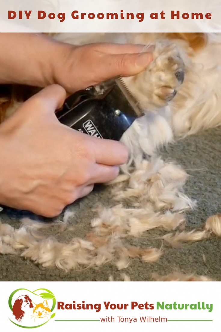 Diy Dog Grooming At Home Basic Dog Grooming And How To Cut A Dog S