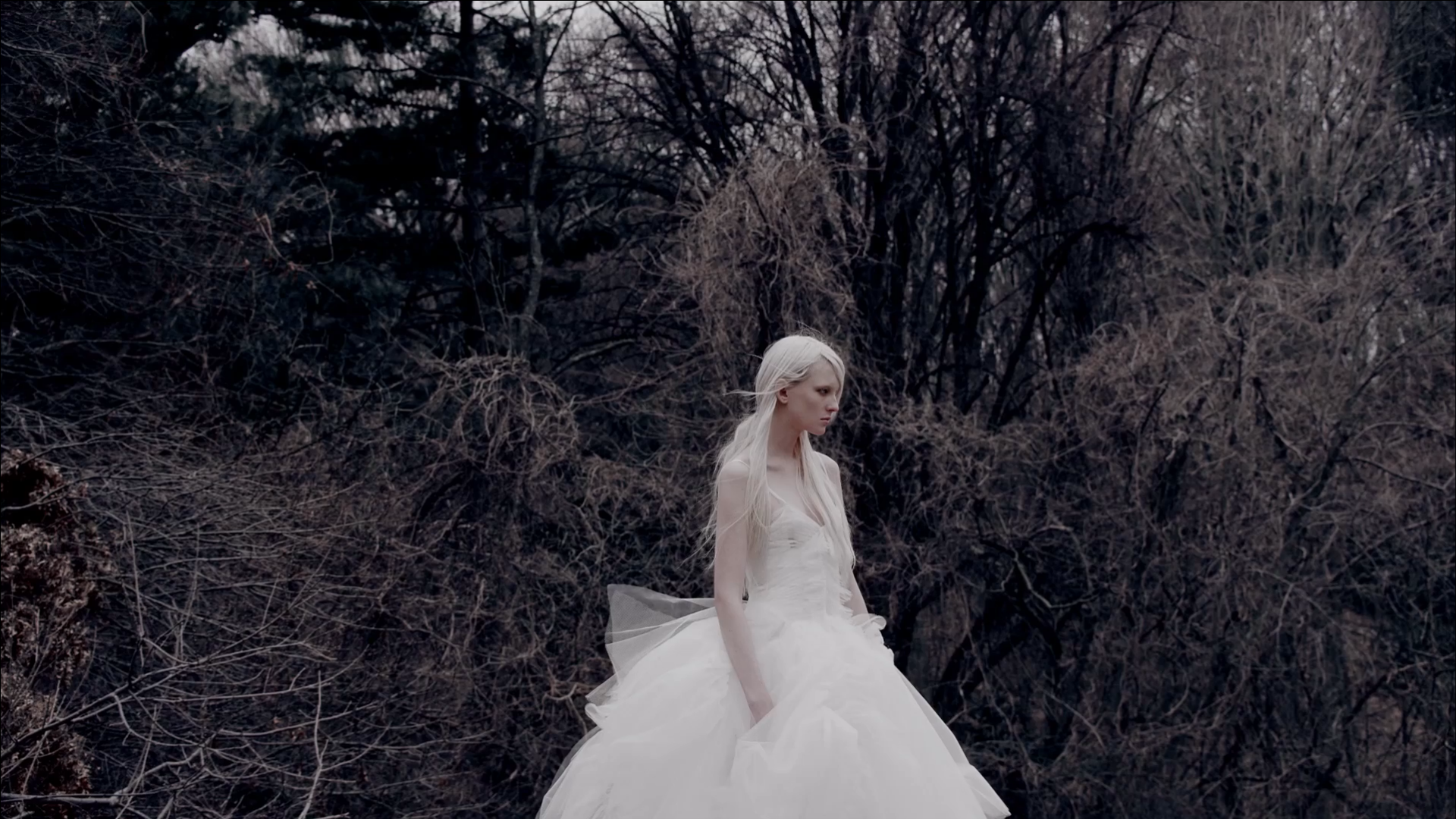 Vera Wang Bride 2015