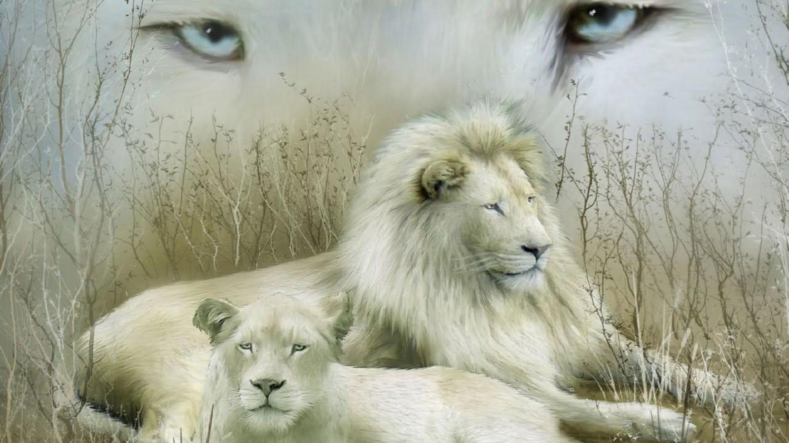 White Lion Hd Images Free Desk Wallpapers White Lion White Lion Images Lion Images