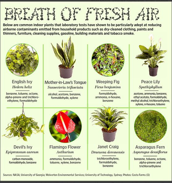 Indoor Plants That Actually Clean The Air You Breathe