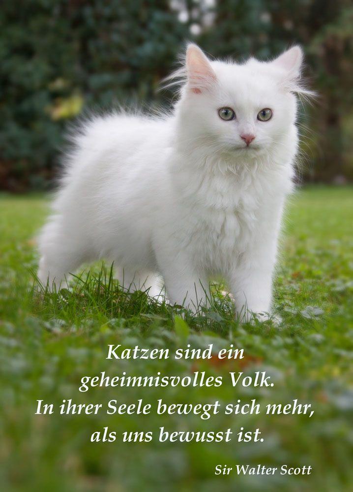 Was wissen wir über die Seelen der Katzen? | Katzen ...