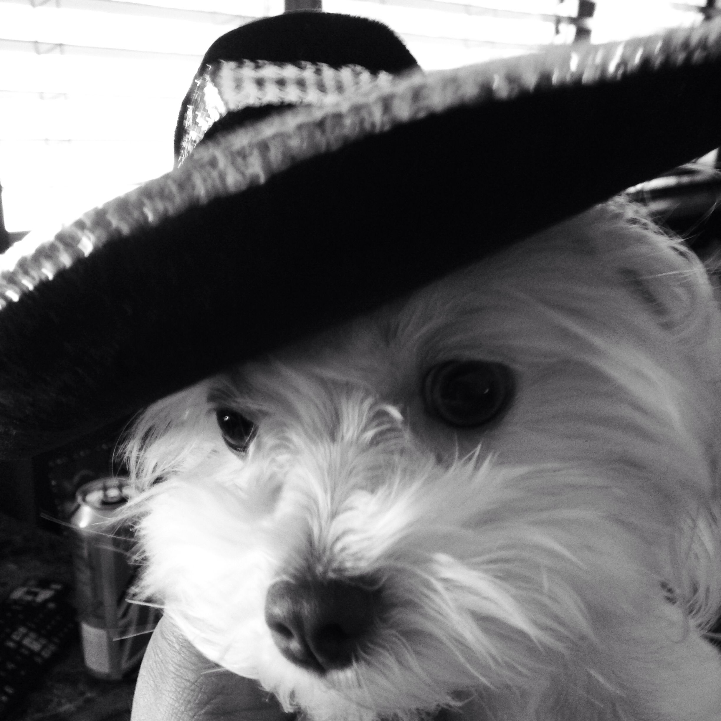 Tobylina Wearing Her Mexican Sombrero Hat That