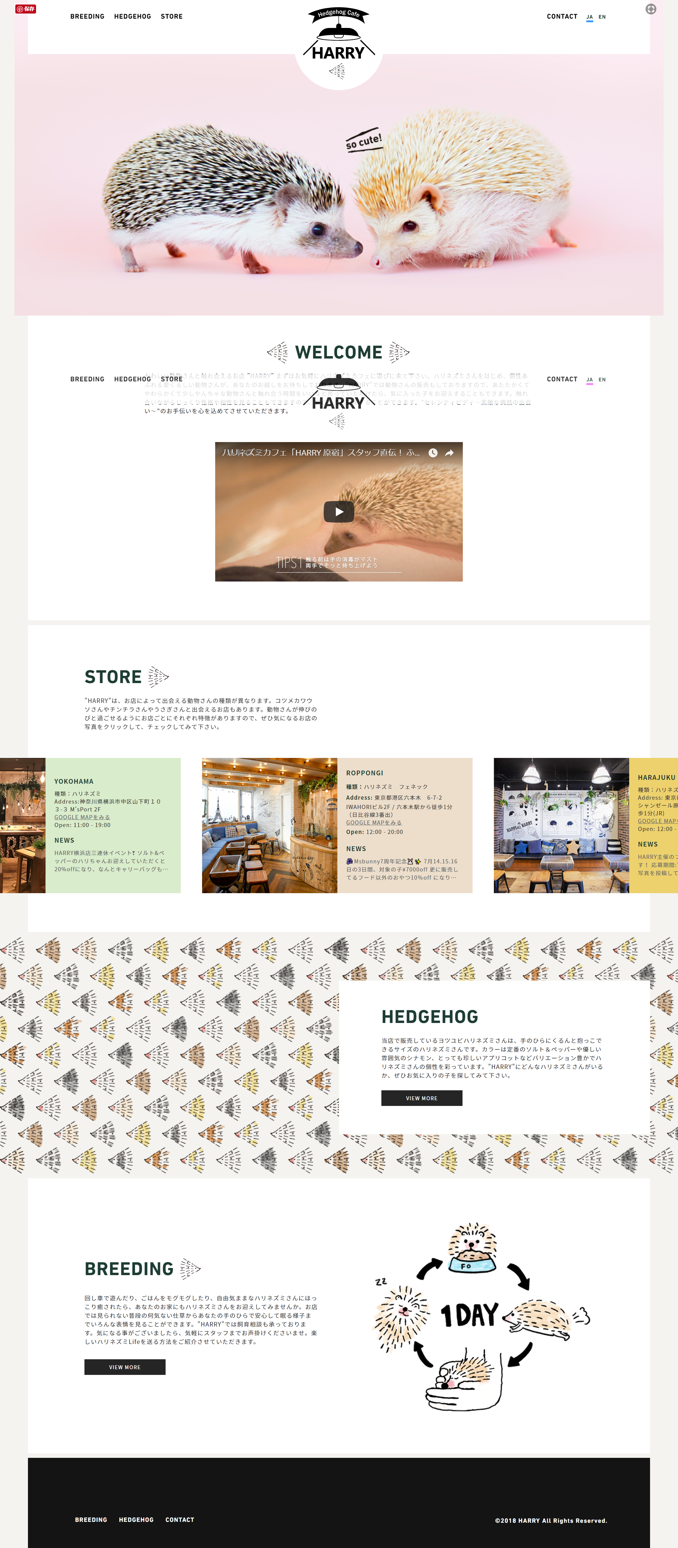 ハリネズミカフェ Harry Lp デザイン ウェブデザイン Webデザイン
