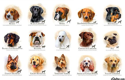 Dog Breeds Canine Cameos White 24 X 44 Panel Dog Breed Names Dog Breeds Puppy Finder