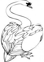 imagens para colorir e imprimir cisnes