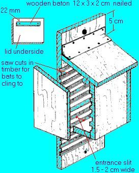 Diy Bat Box House Plans