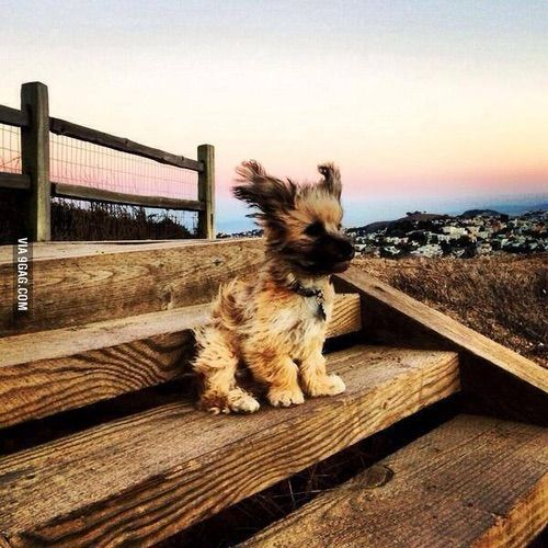 Image via We Heart It https://weheartit.com/entry/152986199 #animals #cute #dog #wind #winter