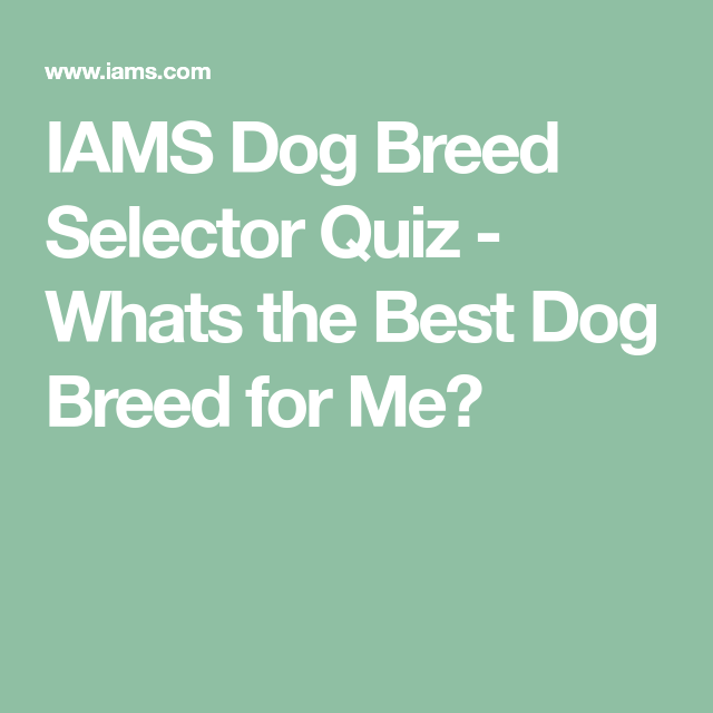 Iams Dog Breed Selector Quiz Whats The Best Dog Breed For Me Dog Breed Selector Best Dog Breeds Best Dogs