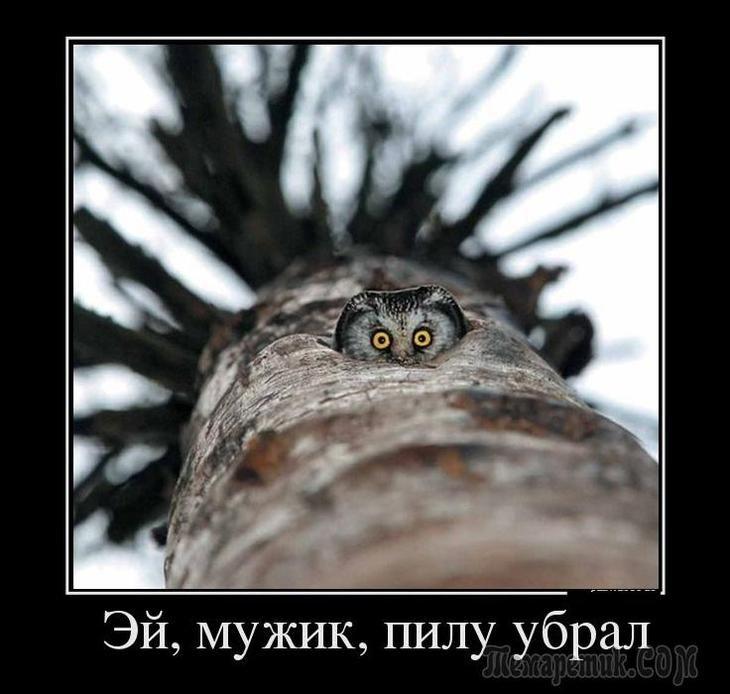 всё демотиватор сова спит ветеран