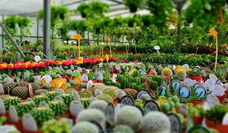 Plant Nursery Near Me Now Find the Best Plant Nursery