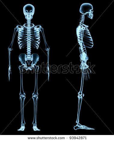 x ray human skeleton – tribeunity,
