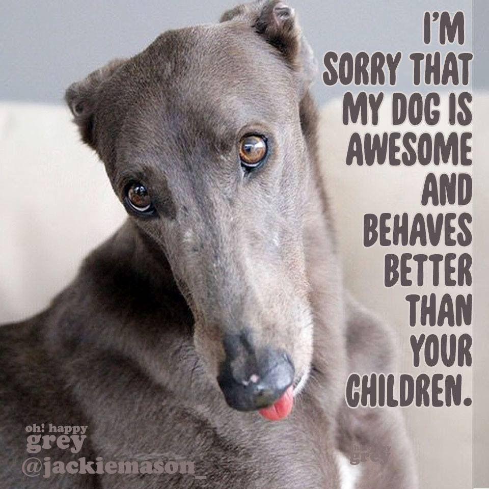 Pin By Hannah Pollard On Greys Furrys Grey Hound Dog Greyhound Dogs