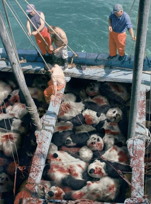 Sea Shepherd Conservation Society - When You See A Tuna, Think Panda