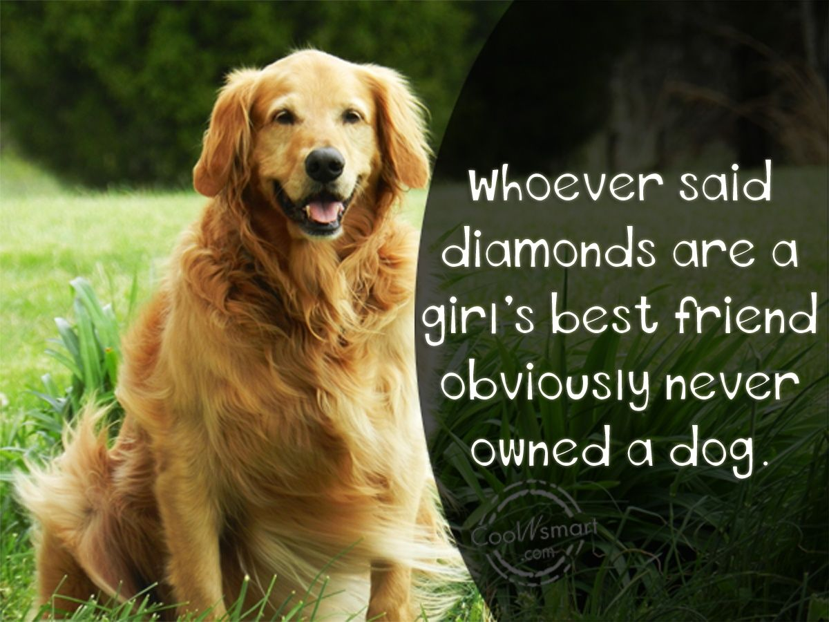 Animals Quotes Quotes About Dogs  Pet Quotes Sayings About Animals  Animals
